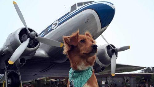 Перевозка животных на самолёте